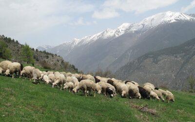 La bergerie de Las Pennas