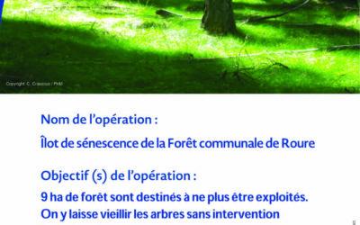 Contrat Natura 2000 bois sénescents en forêt communale de Roure